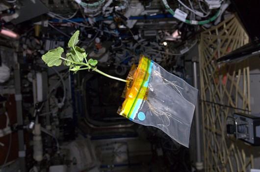 Rośliny na ISS 2