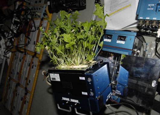 Rośliny na ISS