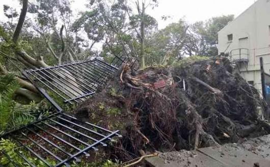 Sydney, Australia - Ogromna burza pozbawiła prądu 200 tysięcy osób 15