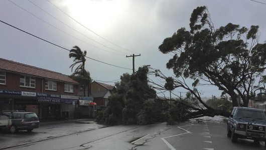 SYDNEY - STORM - NORTHERN BEACHES - TREE