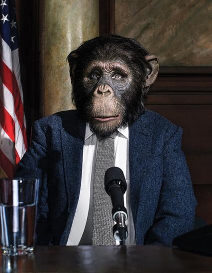 Szympans w garniturze