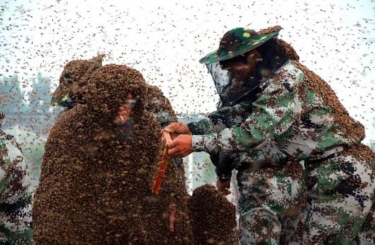 Chiny - Pobito rekord Guinnessa, mężczyzna miał na sobie prawie 1.1 miliona pszczół, które ważyły 109.5 kg