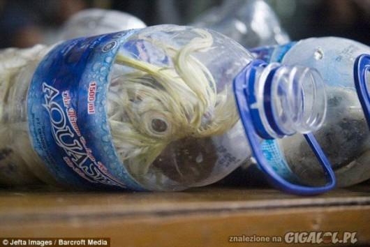 Indonezja - Przemyt papug Kakadu w butelkach 2