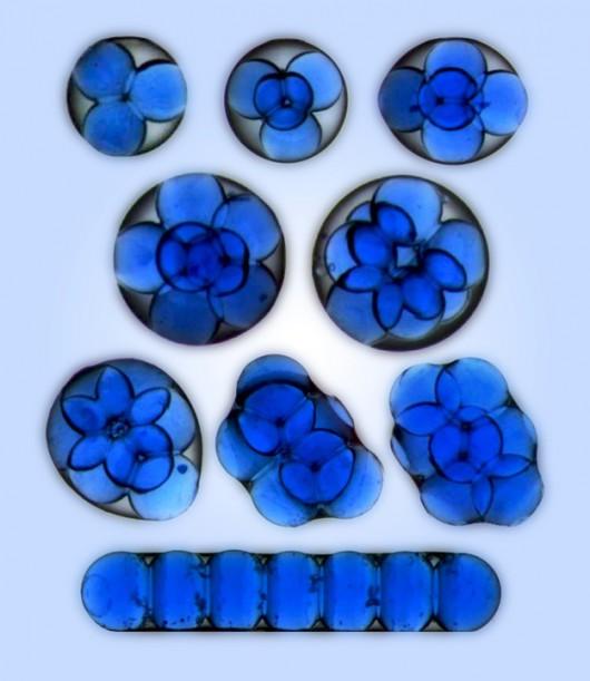 Mezoatomy (struktury uformowane przez mikrokrople wody uwięzione w kropli oleju)