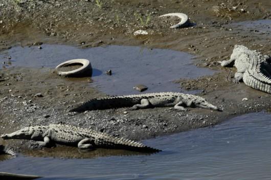 Tampico, Meksyk - Na skutek obfitych opadów deszczu woda w rzekach i jeziorach wystąpiła z brzegów 7