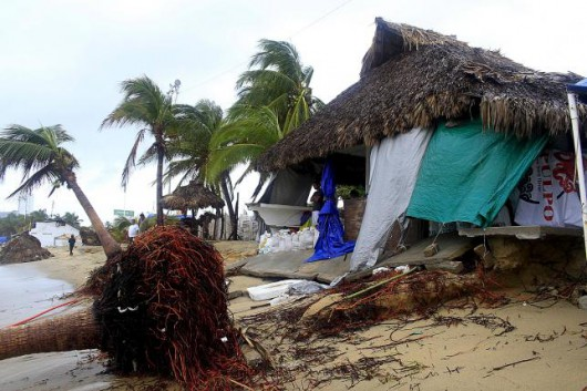 An uprooted palm tree is pictured after it was hit by tropical storm Carlos, in front a restaurant,  in Acapulco