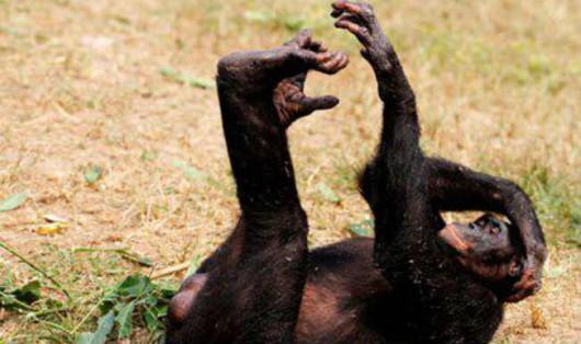 Spoglądając na zachowanie pijanych małp...