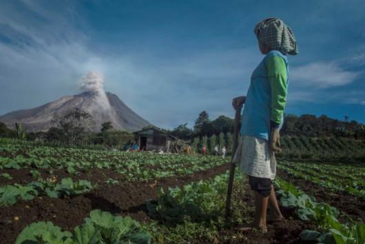 Sumatra - Erupcja wulkanu Sinabung 5