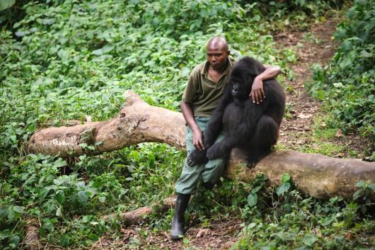 Imprezka z szympansem wcale nie jest niemożliwa!