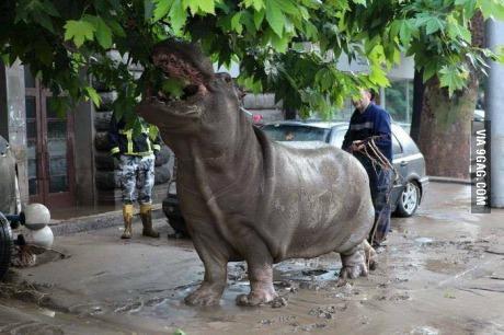 Tbilisi, Gruzja - Ogromna powódź w bardzo krótkim czasie 2