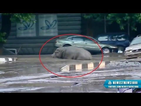 Tbilisi, Gruzja - Ogromna powódź w bardzo krótkim czasie 22
