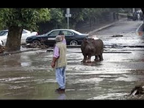 Tbilisi, Gruzja - Ogromna powódź w bardzo krótkim czasie 23
