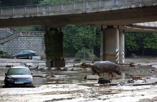Tbilisi, Gruzja - Ogromna powódź w bardzo krótkim czasie 6