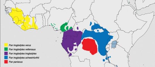 Mapa występowania szympansów
