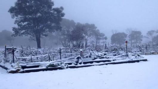 Śnieg sypie w Australii -4