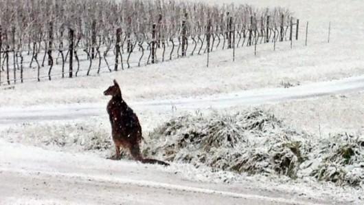 Australia - Największe od 50 lat opady śniegu -10