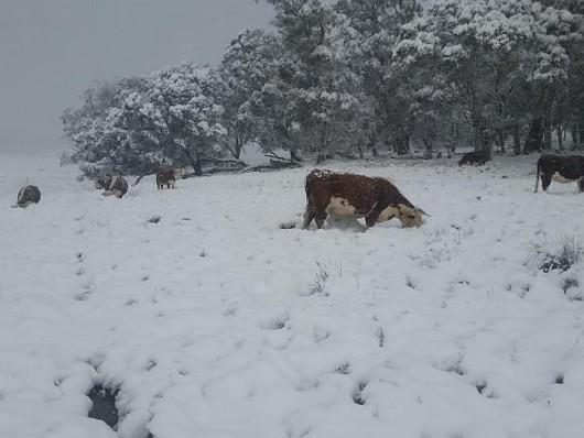 Australia - Największe od 50 lat opady śniegu -2