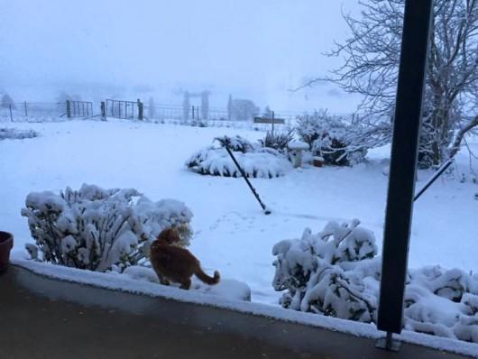 Australia - Największe od 50 lat opady śniegu -7