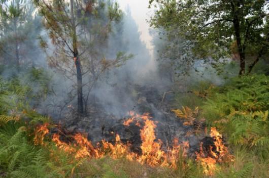 Bordeaux, Francja - Setki strażaków walczy z pożarami, ewakuowano 10 tysięcy turystów -1