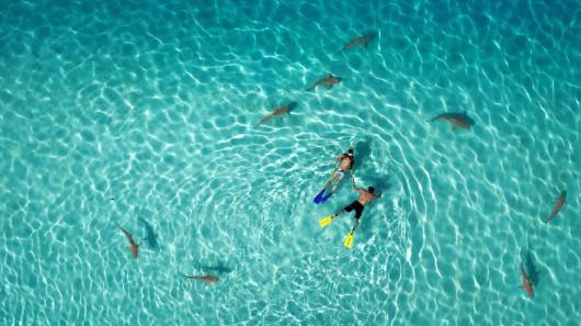 "1 miejsce w kategorii Natura: ""Snorkeling with sharks"" Tahitiflyshoot"