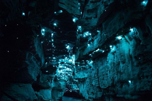 Nowa Zelandia - Niezwykła atmosfera w podziemnej grocie 9