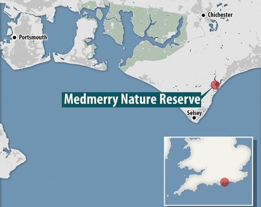 Selsey, UK - Ogromna ilość małych rekinów na południowym wschodzie Anglii -3