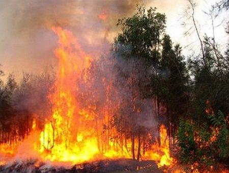 Węgry - Piorun spowodował pożar lasów jałowcowych -3