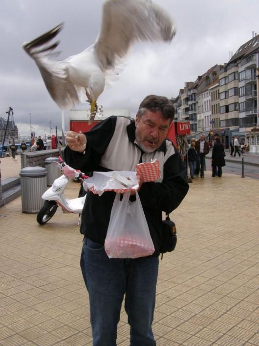 Belgia - Mewy atakują ludzi na plaży, którzy coś jedzą -1