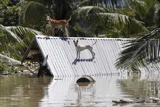 Birma, Indie, Nepal - Deszcze monsunowe zabiły co najmniej 96 osób -7