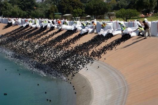 Los Angeles, USA - 96 milionów polietylenowych czarnych kulek będzie chronić zbiornik wodny -2