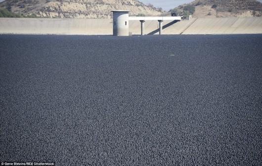 Los Angeles, USA - 96 milionów polietylenowych czarnych kulek będzie chronić zbiornik wodny -3