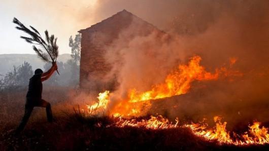 Portugalia - Spłonęło już 215 tysięcy hektarów lasów, zginęło 16 osób -2
