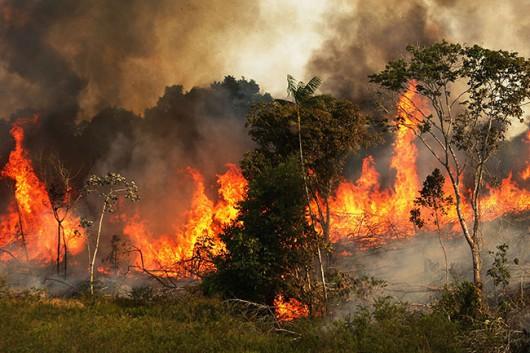 Portugalia - Spłonęło już 215 tysięcy hektarów lasów, zginęło 16 osób -3
