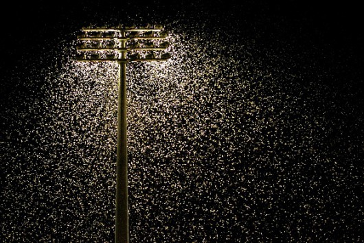 (AUSTRALIA & NEW ZEALAND OUT) Thousands of moths swarm around flood lights at the Newcastle United Jets home game at Energy Australia Stadium in Newcastle, 1 October 2005. NCH NEWS Picture by SIMONE DE PEAK (Photo by Fairfax Media via Getty Images)