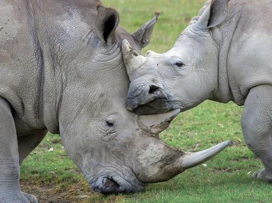 Alldays, Republika Południowej Afryki - Trzynastu bogatych turystów z Europy pojechało zrobić rzeź dzikich zwierząt dla przyjemności -3