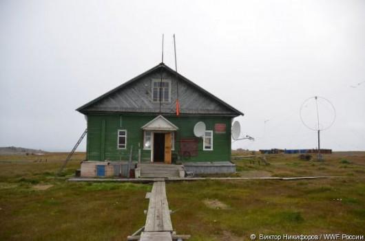 Rosja - Niedźwiedzie polarne sterroryzowały rosyjskich naukowców ze stacji meteorologicznej na wyspie Wajgacz -2