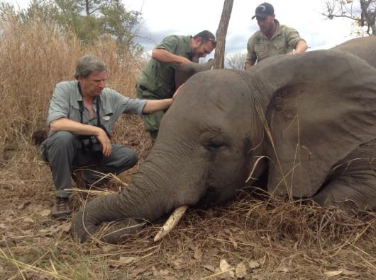 Słonie i kłusownicy