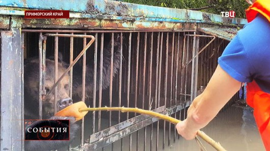 Ussurijsk, Rosja - Potężna nawałnica zalała miasto i zwierzęta w zoo -13