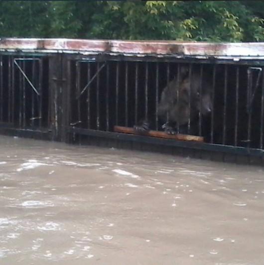 Ussurijsk, Rosja - Potężna nawałnica zalała miasto i zwierzęta w zoo -14