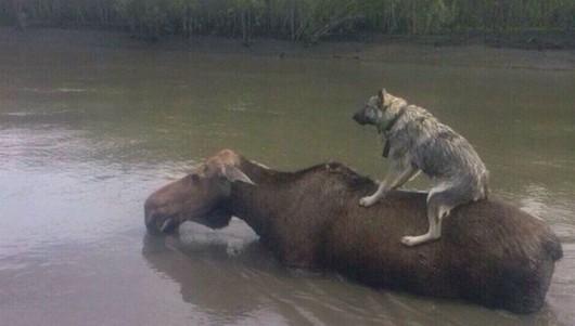 Ussurijsk, Rosja - Potężna nawałnica zalała miasto i zwierzęta w zoo -15