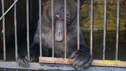 Ussurijsk, Rosja - Potężna nawałnica zalała miasto i zwierzęta w zoo -16