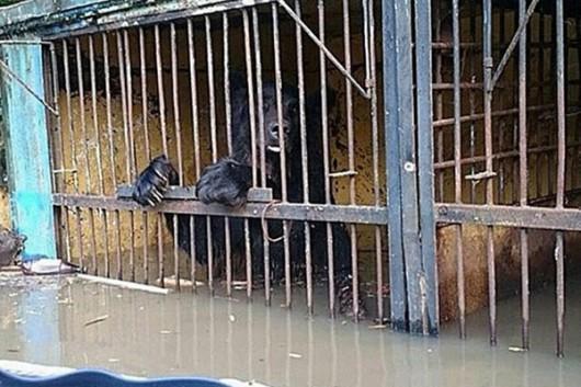 Ussurijsk, Rosja - Potężna nawałnica zalała miasto i zwierzęta w zoo -17