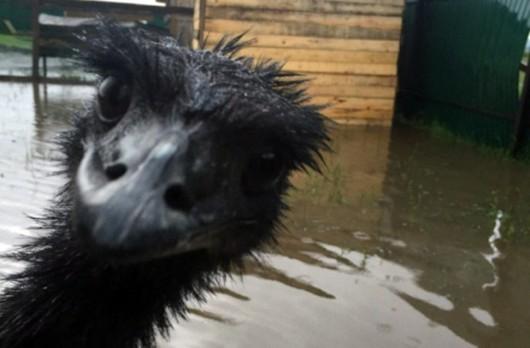 Ussurijsk, Rosja - Potężna nawałnica zalała miasto i zwierzęta w zoo -18