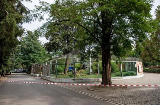 Wrocław, Polska - Tygrys w zoo zagryzł swojego opiekuna podczas sprzątania wybiegu