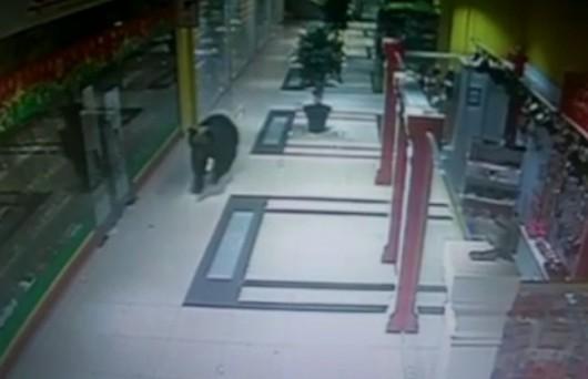 Chabarowsk, Rosja - Niedźwiedź wszedł do centrum handlowego, wystraszone zwierze zastrzeliła policja -1