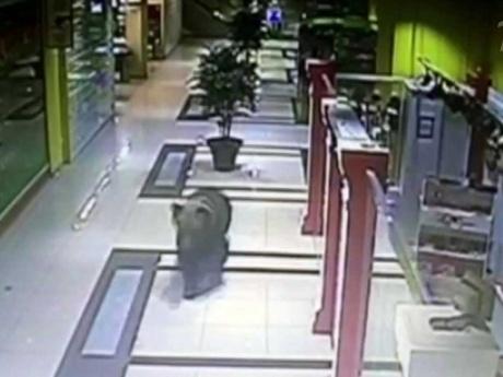 Chabarowsk, Rosja - Niedźwiedź wszedł do centrum handlowego, wystraszone zwierze zastrzeliła policja -2