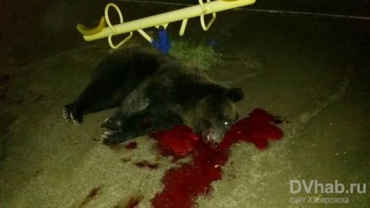 Chabarowsk, Rosja - Niedźwiedź wszedł do centrum handlowego, wystraszone zwierze zastrzeliła policja