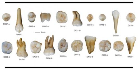 Chiny - W jaskini w Daoxian znaleziono najstarsze ludzkie zęby -1