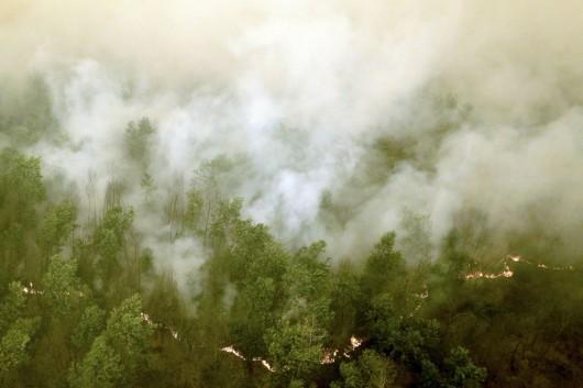Indonezja - Największa katastrofa ekologiczna od 15 lat, ogień spala lasy na długości 5 tysięcy kilometrów -2