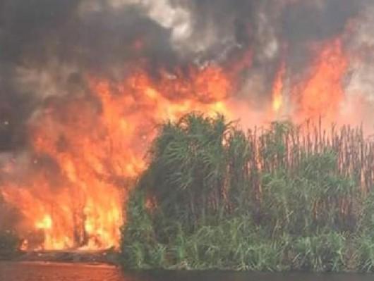 Indonezja - Największa katastrofa ekologiczna od 15 lat, ogień spala lasy na długości 5 tysięcy kilometrów -3